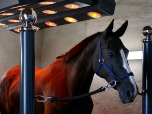 Solarium pour chevaux