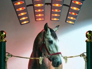 Solarium pour chevaux.